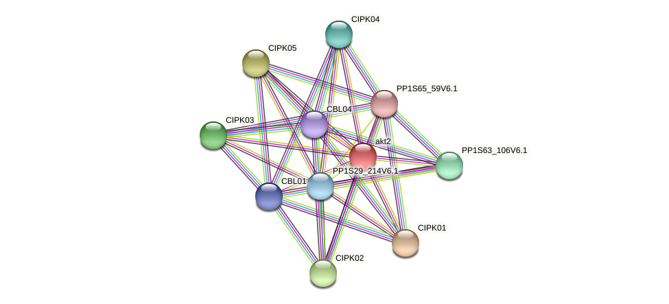 PP1S3_156V6.1 protein (Physcomitrella patens) - STRING interaction network