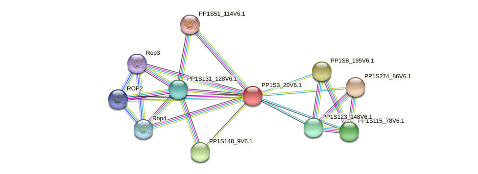 PP1S3_20V6.1 protein (Physcomitrella patens) - STRING interaction network