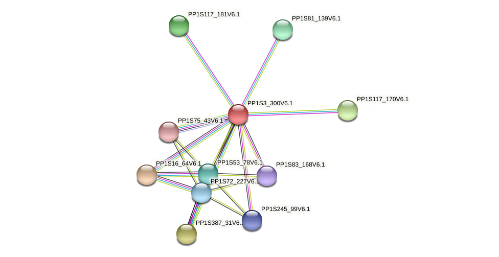 PP1S3_300V6.1 protein (Physcomitrella patens) - STRING interaction network