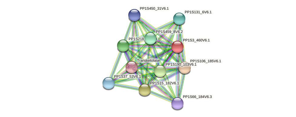 PP1S3_460V6.1 protein (Physcomitrella patens) - STRING interaction network