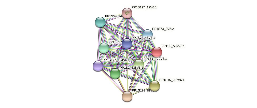 PP1S3_567V6.1 protein (Physcomitrella patens) - STRING interaction network