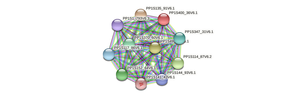 PP1S400_36V6.1 protein (Physcomitrella patens) - STRING interaction network