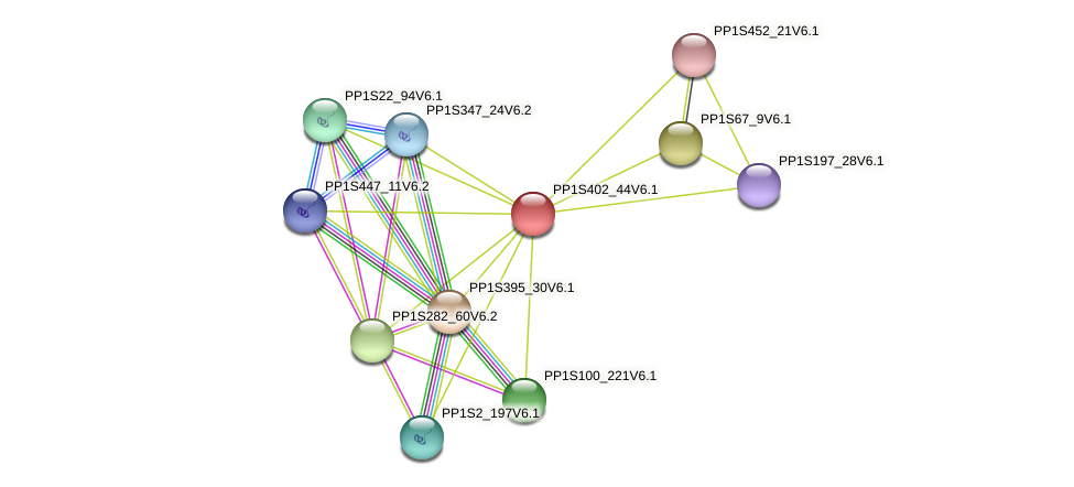 PP1S402_44V6.1 protein (Physcomitrella patens) - STRING interaction network