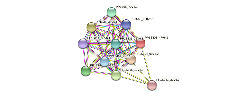 PP1S403_47V6.1 protein (Physcomitrella patens) - STRING interaction network