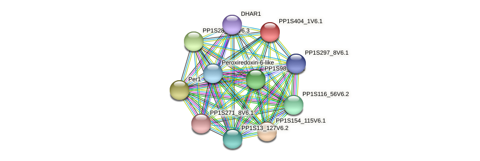 PP1S404_1V6.1 protein (Physcomitrella patens) - STRING interaction network