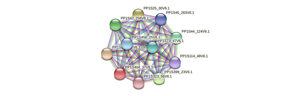 PP1S404_37V6.1 protein (Physcomitrella patens) - STRING interaction network
