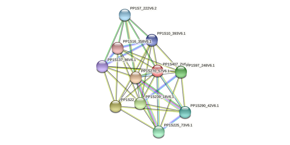 PP1S407_2V6.1 protein (Physcomitrella patens) - STRING interaction network