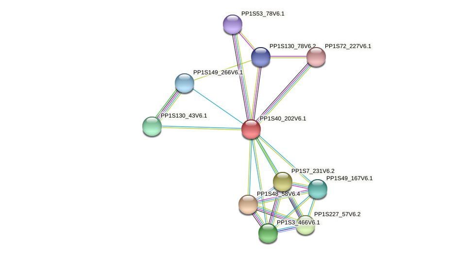 PP1S40_202V6.1 protein (Physcomitrella patens) - STRING interaction network