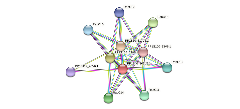 PP1S40_206V6.1 protein (Physcomitrella patens) - STRING interaction network