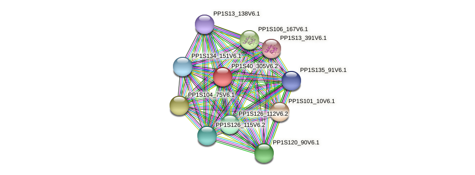 PP1S40_305V6.1 protein (Physcomitrella patens) - STRING interaction network