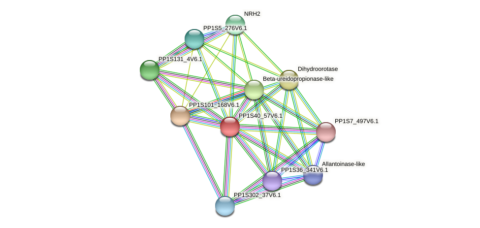 PP1S40_57V6.1 protein (Physcomitrella patens) - STRING interaction network