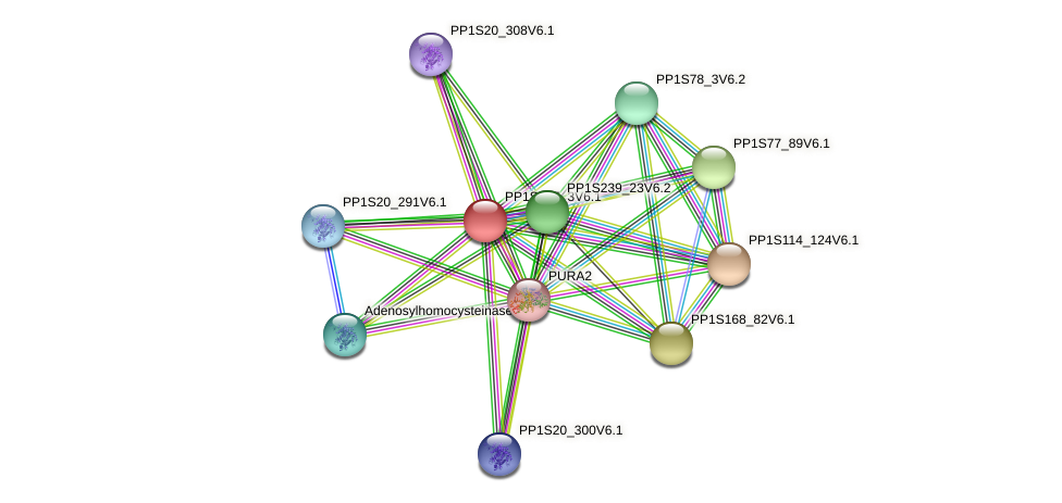 PP1S415_3V6.1 protein (Physcomitrella patens) - STRING interaction network
