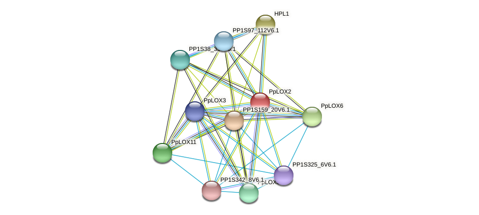 PpLOX2 protein (Physcomitrella patens) - STRING interaction network