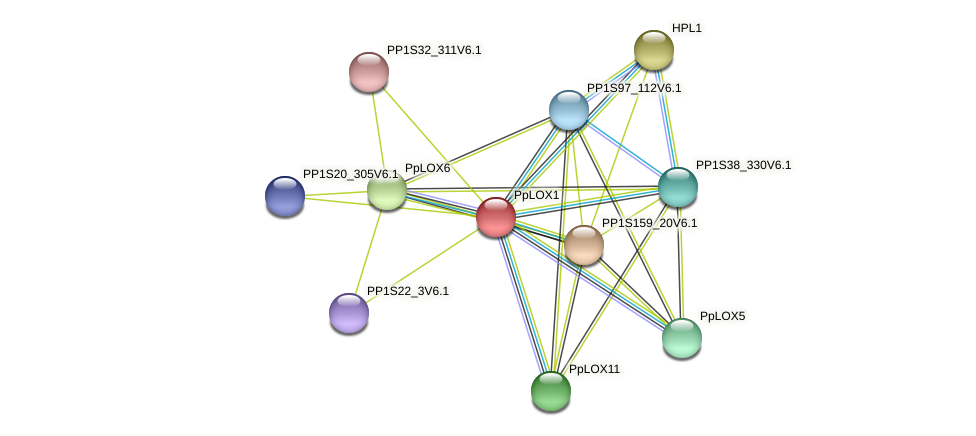 PpLOX1 protein (Physcomitrella patens) - STRING interaction network