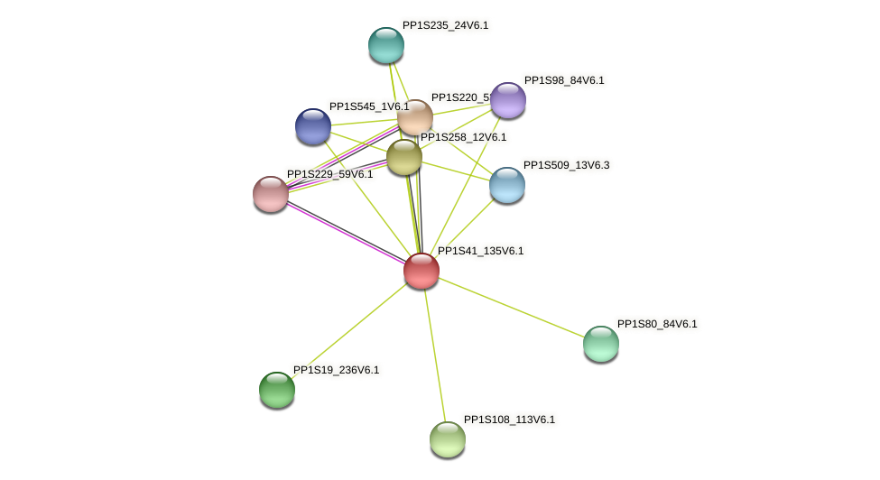 PP1S41_135V6.1 protein (Physcomitrella patens) - STRING interaction network