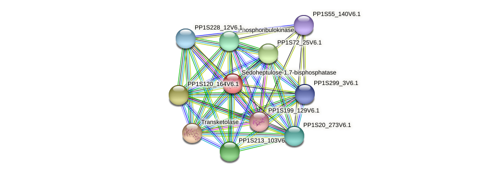 PP1S41_162V6.1 protein (Physcomitrella patens) - STRING interaction network