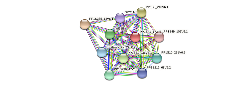 PP1S41_172V6.1 protein (Physcomitrella patens) - STRING interaction network