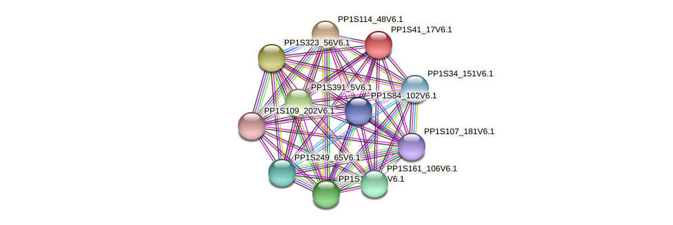 PP1S41_17V6.1 protein (Physcomitrella patens) - STRING interaction network