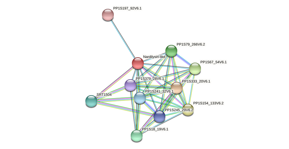 PP1S41_18V6.1 protein (Physcomitrella patens) - STRING interaction network