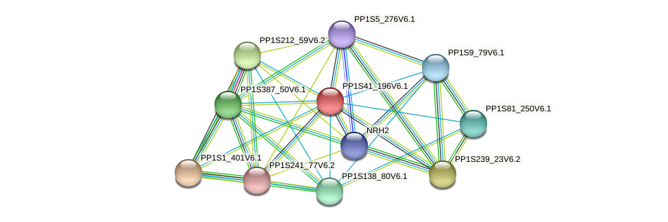 PP1S41_196V6.1 protein (Physcomitrella patens) - STRING interaction network