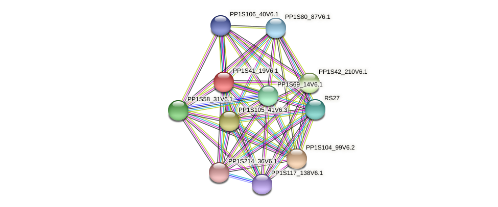 PP1S41_19V6.1 protein (Physcomitrella patens) - STRING interaction network