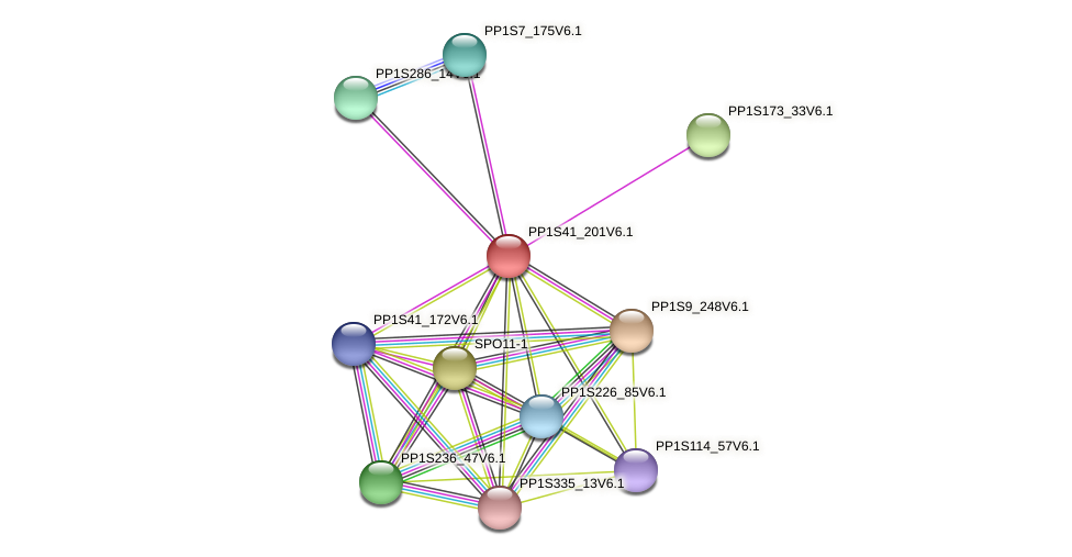 PP1S41_201V6.1 protein (Physcomitrella patens) - STRING interaction network