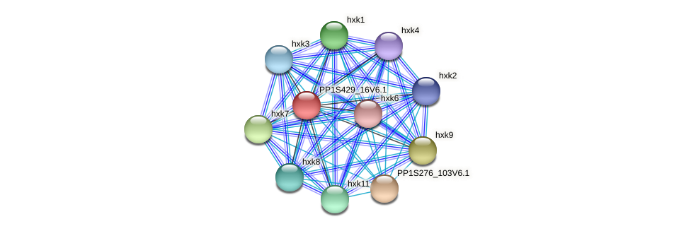 PP1S429_16V6.1 protein (Physcomitrella patens) - STRING interaction network