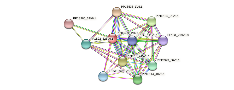 PP1S429_1V6.1 protein (Physcomitrella patens) - STRING interaction network