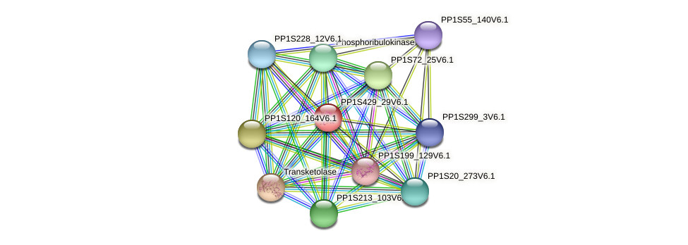 PP1S429_29V6.1 protein (Physcomitrella patens) - STRING interaction network
