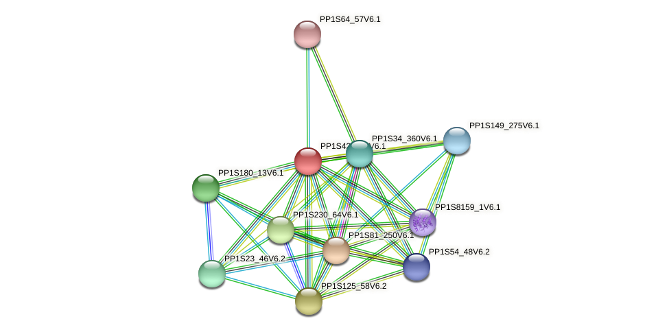 PP1S42_130V6.1 protein (Physcomitrella patens) - STRING interaction network