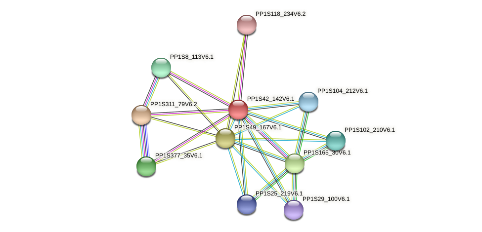 PP1S42_142V6.1 protein (Physcomitrella patens) - STRING interaction network