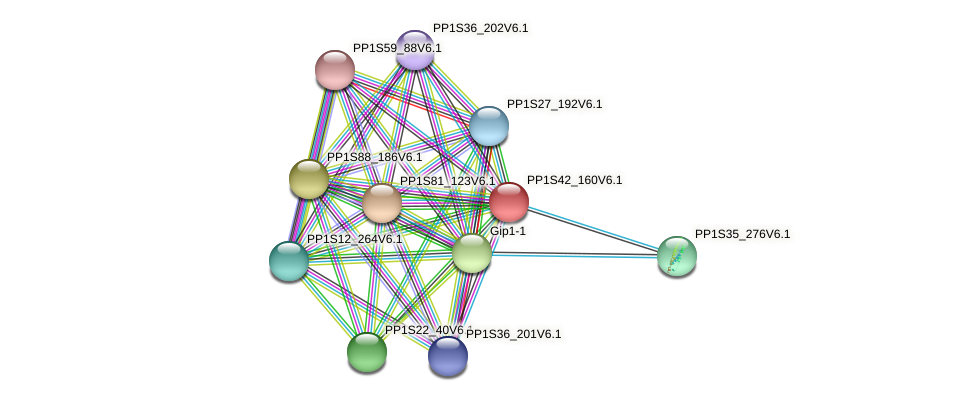 PP1S42_160V6.1 protein (Physcomitrella patens) - STRING interaction network