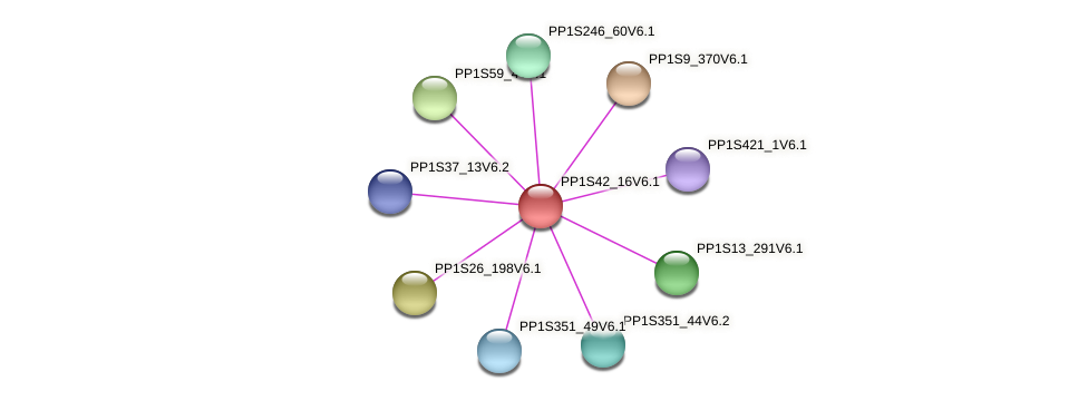 PP1S42_16V6.1 protein (Physcomitrella patens) - STRING interaction network