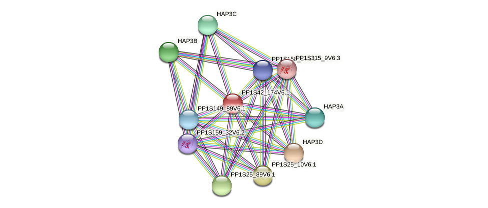 PP1S42_174V6.1 protein (Physcomitrella patens) - STRING interaction network