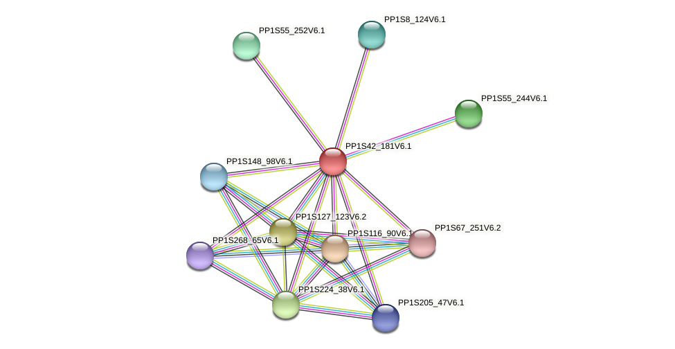 PP1S42_181V6.1 protein (Physcomitrella patens) - STRING interaction network