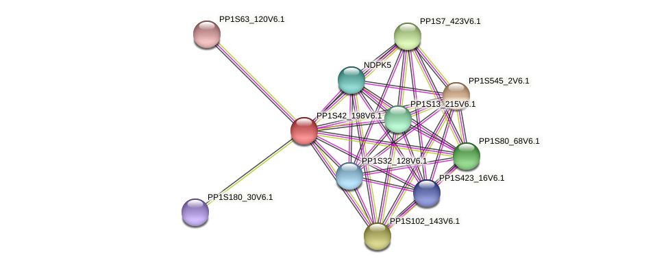 PP1S42_198V6.1 protein (Physcomitrella patens) - STRING interaction network