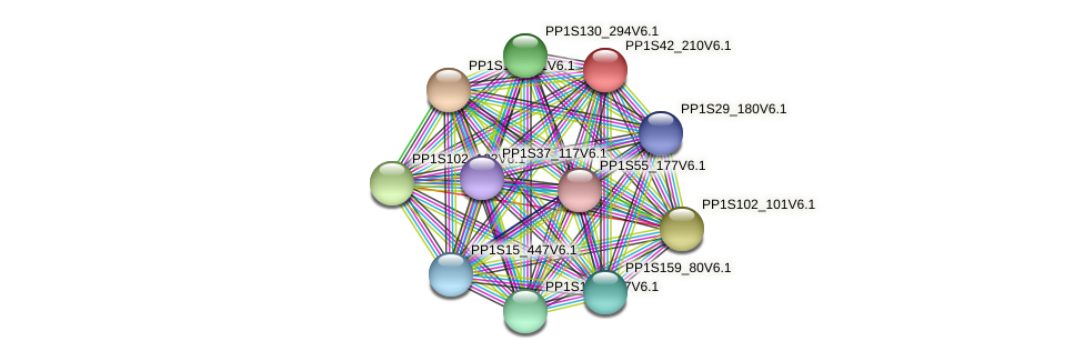 PP1S42_210V6.1 protein (Physcomitrella patens) - STRING interaction network