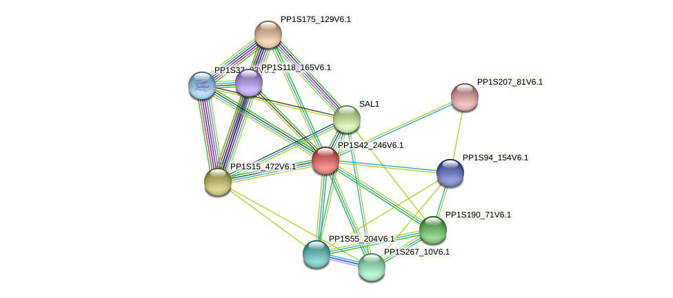 PP1S42_246V6.1 protein (Physcomitrella patens) - STRING interaction network