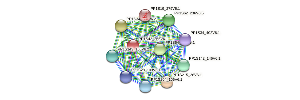 PP1S42_255V6.1 protein (Physcomitrella patens) - STRING interaction network