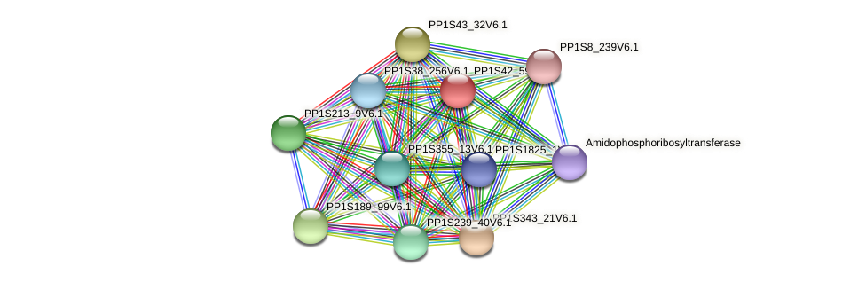 PP1S42_59V6.1 protein (Physcomitrella patens) - STRING interaction network