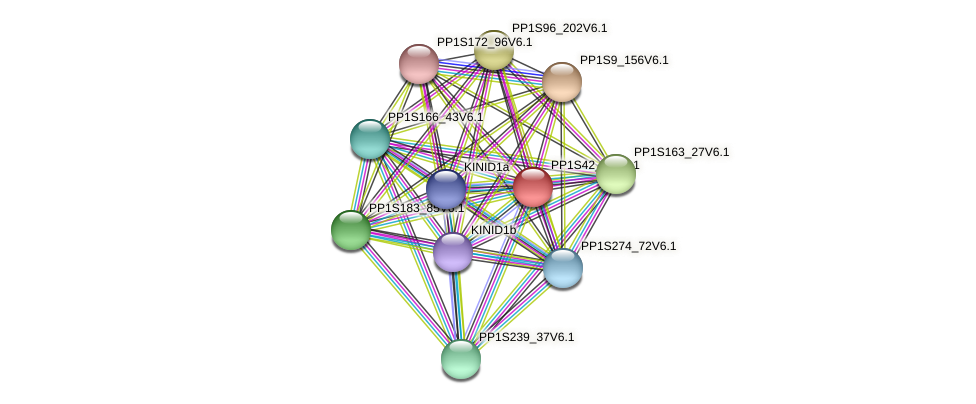 PP1S42_71V6.1 protein (Physcomitrella patens) - STRING interaction network