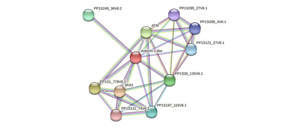 PP1S432_19V6.1 protein (Physcomitrella patens) - STRING interaction network