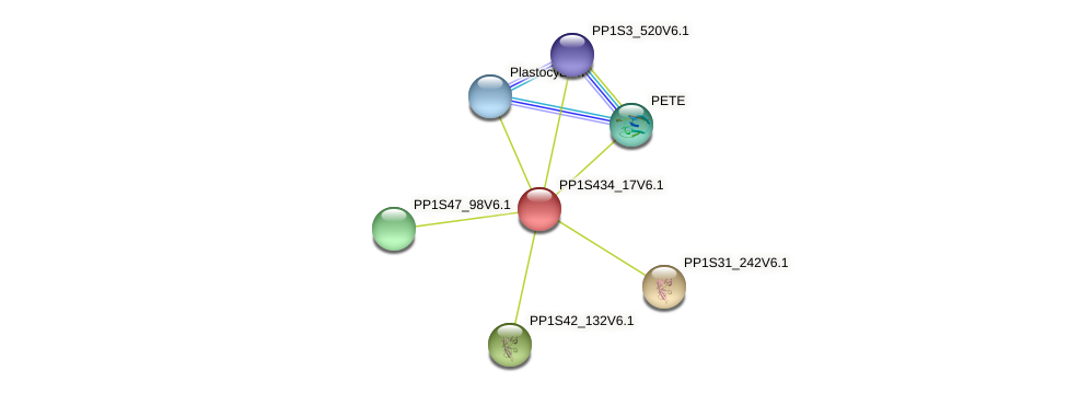 PP1S434_17V6.1 protein (Physcomitrella patens) - STRING interaction network