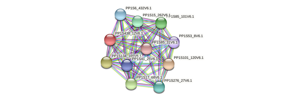 PP1S438_12V6.1 protein (Physcomitrella patens) - STRING interaction network
