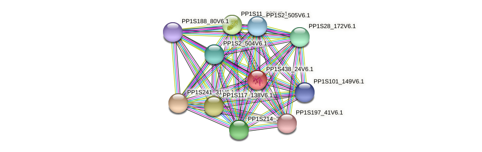 PP1S438_24V6.1 protein (Physcomitrella patens) - STRING interaction network