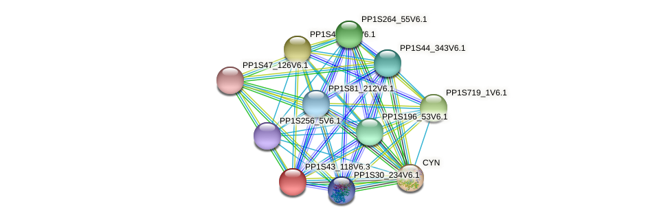 PP1S43_118V6.2 protein (Physcomitrella patens) - STRING interaction network