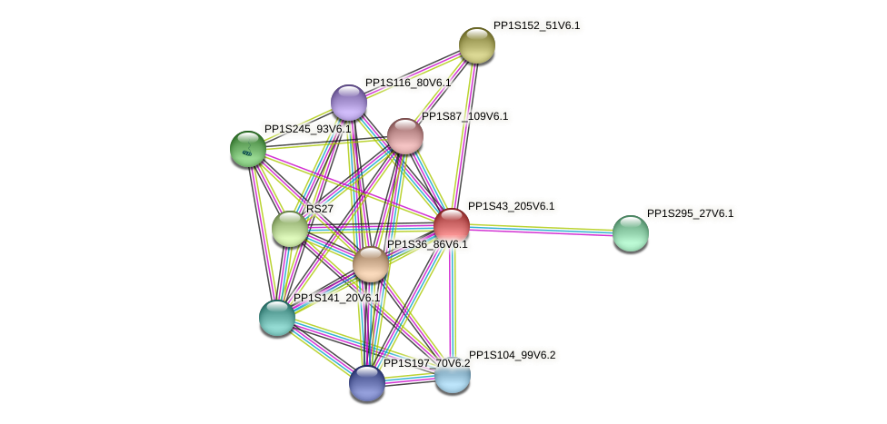 PP1S43_205V6.1 protein (Physcomitrella patens) - STRING interaction network