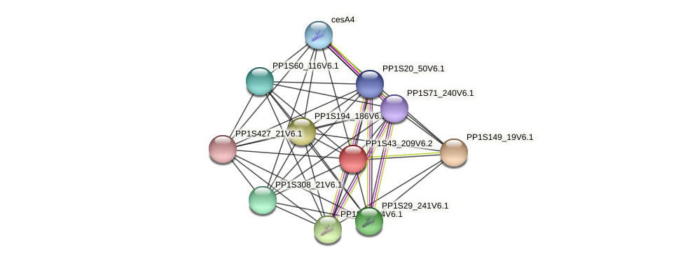 PP1S43_209V6.1 protein (Physcomitrella patens) - STRING interaction network