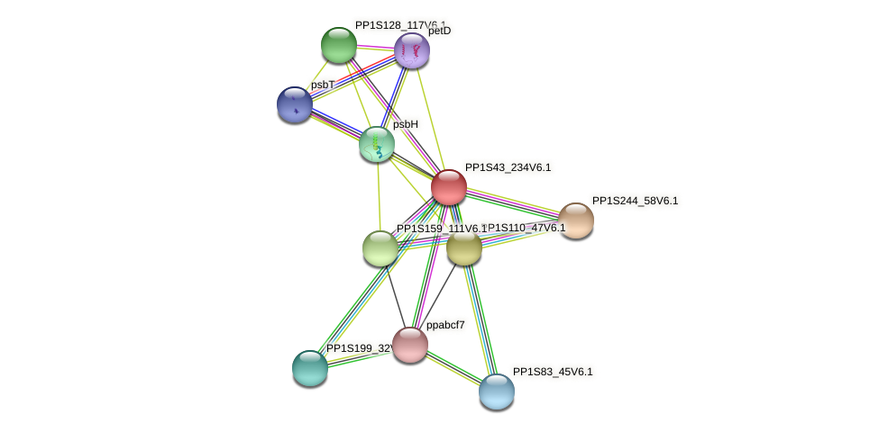 PP1S43_234V6.1 protein (Physcomitrella patens) - STRING interaction network