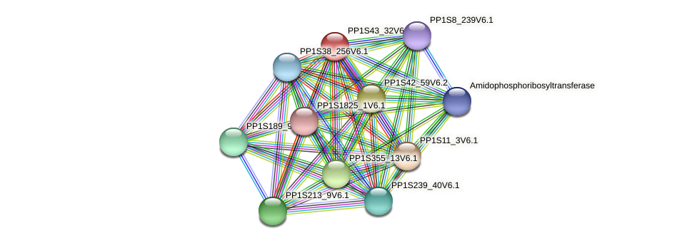 PP1S43_32V6.1 protein (Physcomitrella patens) - STRING interaction network
